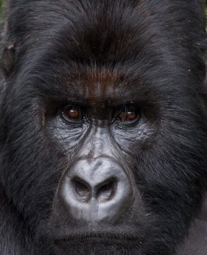 Democratic Republic of Congo holidays Gorilla trekking Virunga National Park