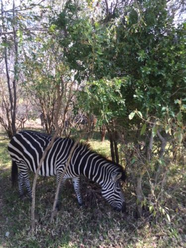 Cape Town, Vic Falls, and Southern Africa Safari